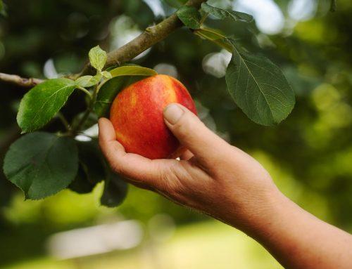 Fyldte æbler med marcipan
